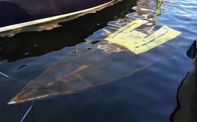 Die Wasserqualität in der Scharfen Lanke ist ausgezeichnet - Photo © SailingAnarchy.de 2016